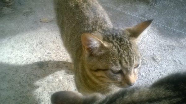 chat reveur