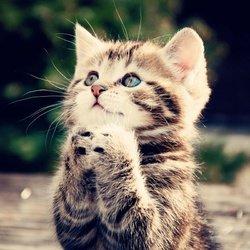 superbe chaton