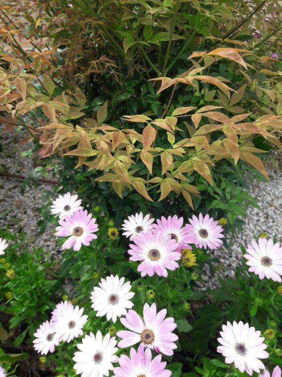 Avec un ciel bleu et un beau soleil je vous souhaite un bon lundi et semaine naturellement toujours avec des fleurs du parc gros bisous aube-rose Nina