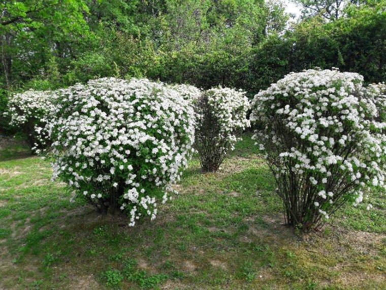 Coucou mes amis bon lundi et agréable  semaine  j'ai toujours de fleurs pour vous saluer bisous aube-rose Nina
