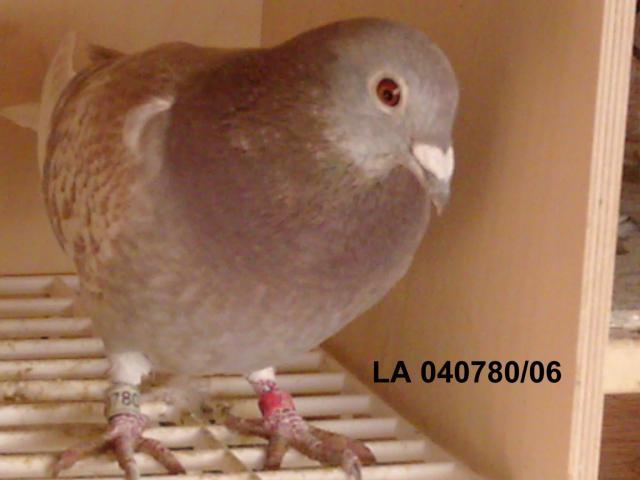 As pigeons qui ont marqué la colonie et ne compose plus l'équipe de jeu la 40780/06