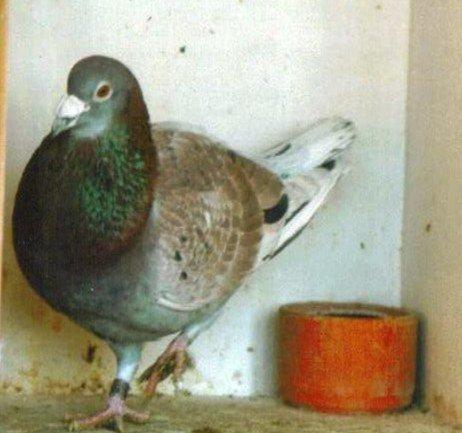 nous avons retrouvé une photo de Révolin.