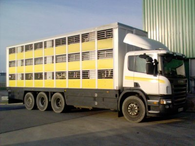 Un porteur Scania P380 8x4 des transports Jouchet du Cambout (22).