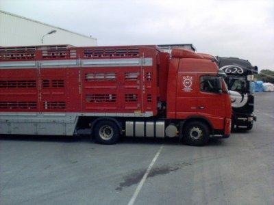 À quel transporteur appartient le King en série limitée derrière le FH16 ?