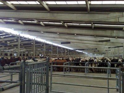 Visite du plus gros marché en Belgique, celui de Ciney.
