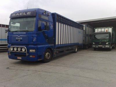 Man TGA 460 XXL du transporteur Baele de Ternat (B).