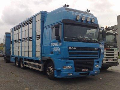 Vervoer Van Dieren, transport d'animaux en flamant.