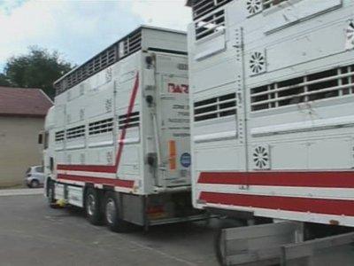 Parlons un peu de la répartition des animaux dans le camion.