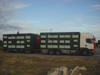 Scania R500 du transporteur Cruho de Saint-Clément de la Place (49).