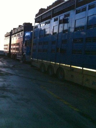 Cette tournée est une tâche régulièrement réalisée par les transports Lelandais (22).