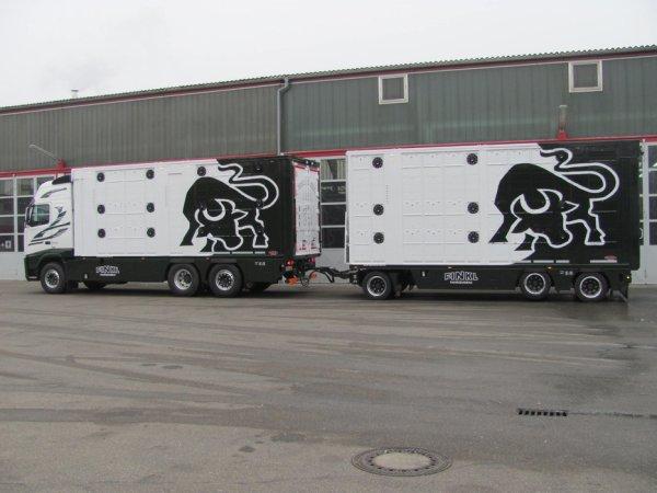 Les dessins de taureaux fous sont la dernière innovation esthétique en date.