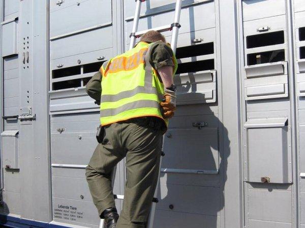 Contraignantes propositions dans la réglementation du transport des animaux vivants.