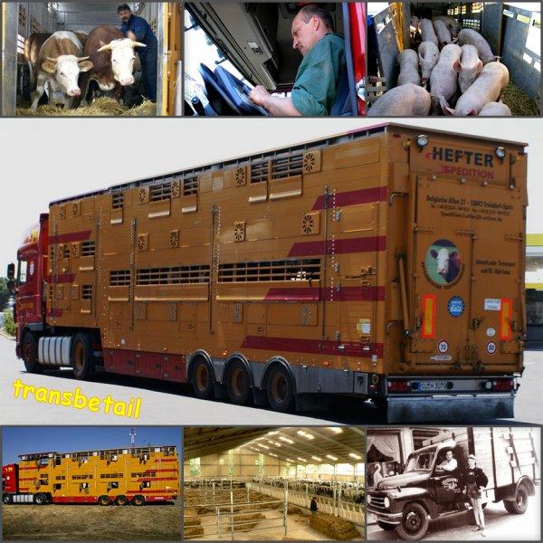 Une société allemande pionnière dans la création de troupeaux de bovins en Asie.