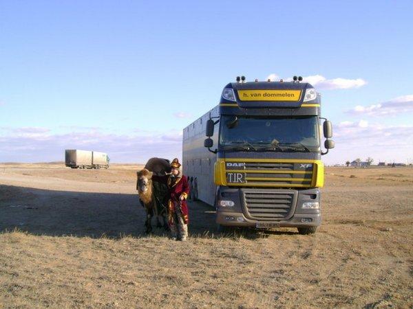 Retraçons l'historique de la Cattle-Cruiser et ses plus récentes déclinaisons.