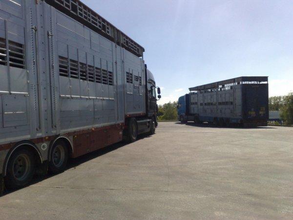 Autre Scania 164L 480, celui-ci est aux transports Lelandais d'Aucaleuc (22).