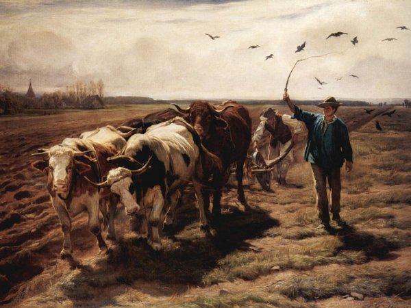 Représentation des bovins dans le monde ainsi que les portraits du buffle et du zébu.