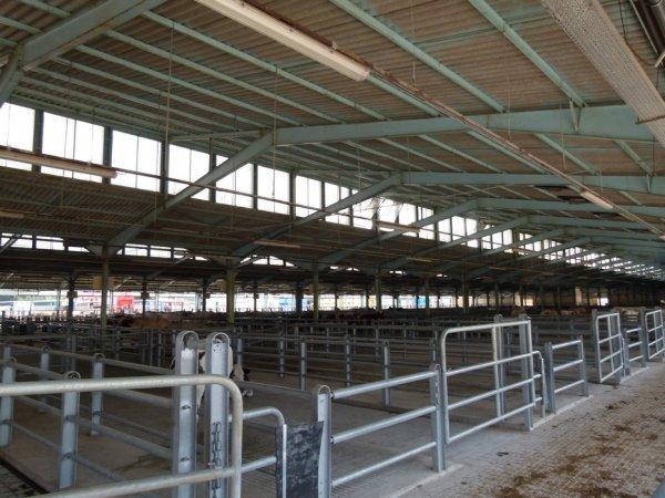 Les marchés aux bestiaux contrastent entre traditions et modernité.
