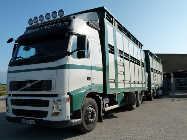 Volvo FH13 480 de la Socopa. Il dépend du site d'abattage de Coutances (50).