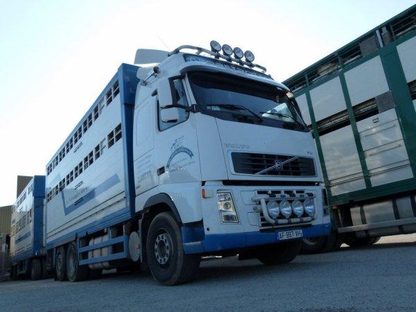 Volvo FH13 480 de la société de négoce en bestiaux Bétail Gorronnais (53).