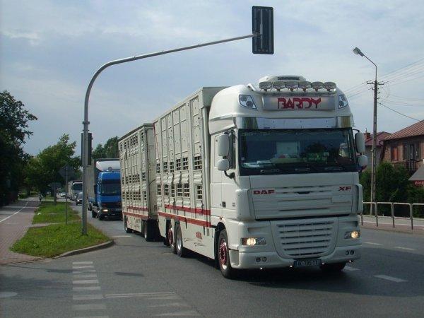 Grâce à une coopération franco-allemande, cap sur l'Ouzbékistan avec des vaches.