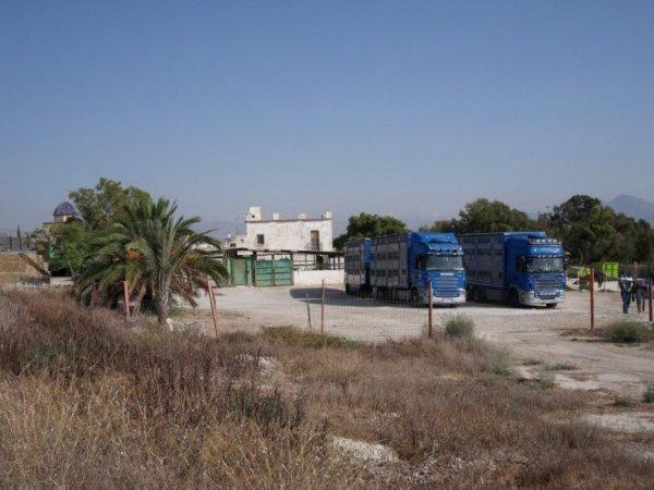 Les 24 heures de repos obligatoires ont eu lieu dans cette cour à Alicante (E).