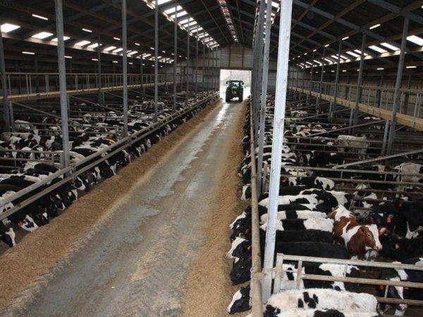 Il existe principalement deux types de production dans la filière du veau.