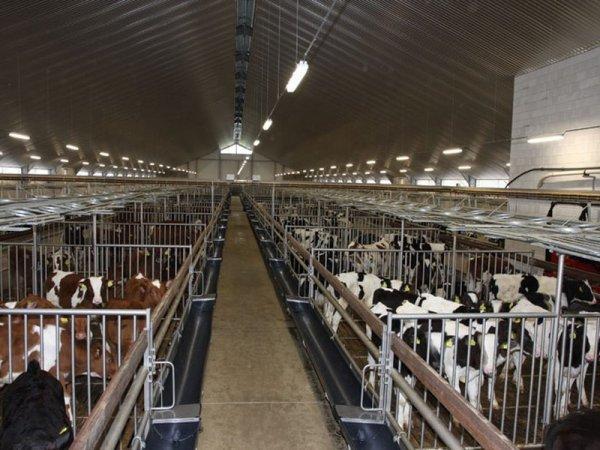 Aux Pays-Bas, les élevages sont concentrés à proximité des outils industriels.