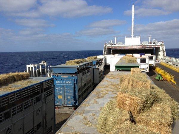 Évasion de chauffeurs français vers la Tunisie pour livrer plus de 230 broutards.