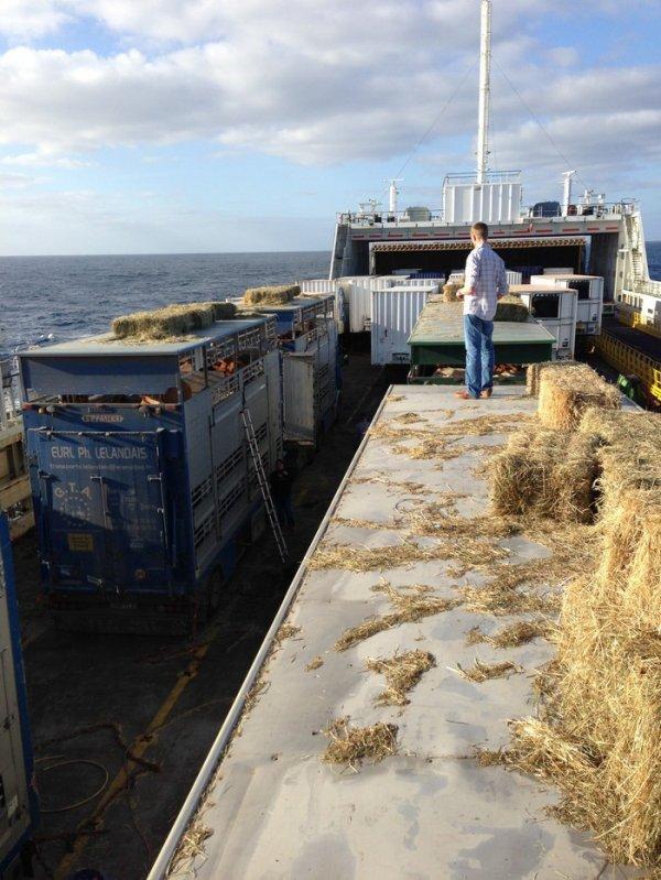 Le ferry accoste à Tunis pendant que transitaire et douaniers s'accordent.