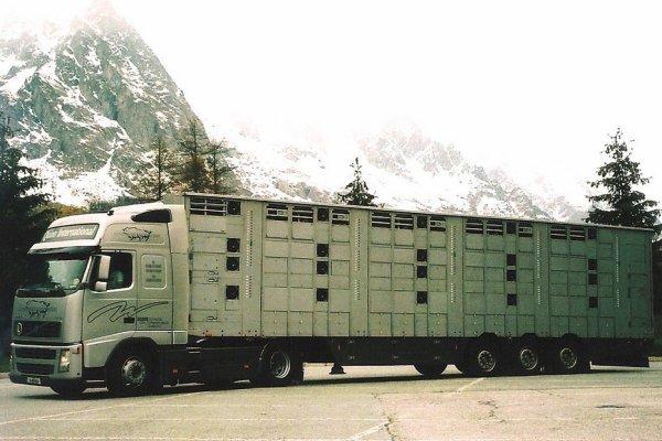 Dès 2005, des contrats sont souscrits avec l'Italie pour livrer des broutards.
