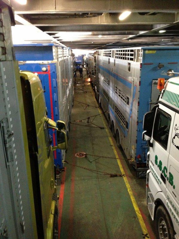 Embarquement des douze bétaillères dans le garage du « Celtic Horizon ».