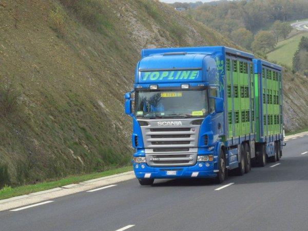 Les italiens sont très présents avec les broutards à expédier vers leur pays.
