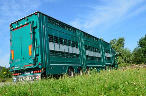 Visite du marché aux bestiaux de Bourg-en-Bresse (01) - 2 juillet 2013.