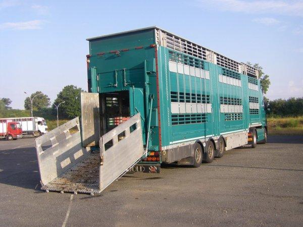 Découverte du marché aux bestiaux de Sancoins (18) - 24 juillet 2013.