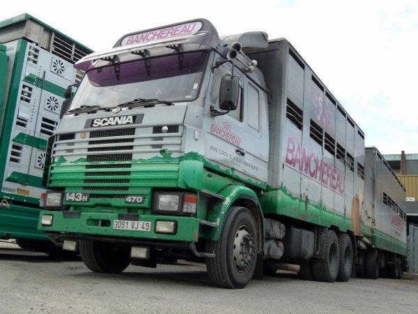 Scania 143H 470 de la société de négoce Banchereau SAS de Coron (49).
