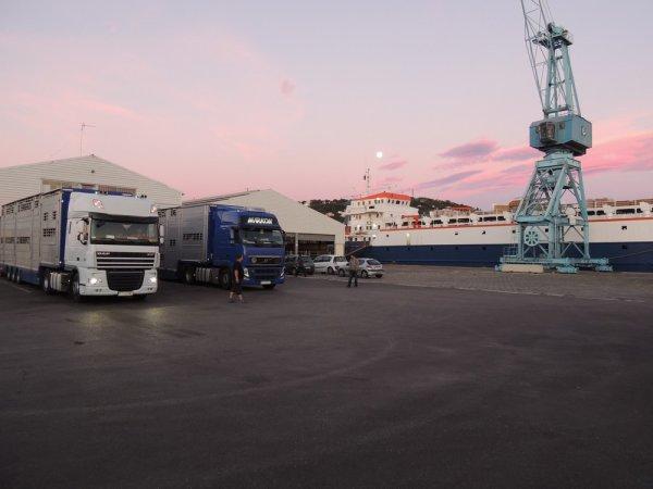 Les transports Markon (PL) ont reçu début août leur Pezzaioli SBA31-SR.