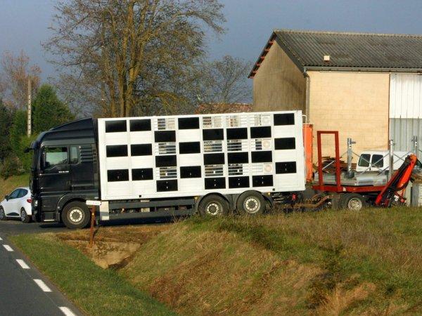 Différents camions de grande capacité avec plus ou moins d'ornement.