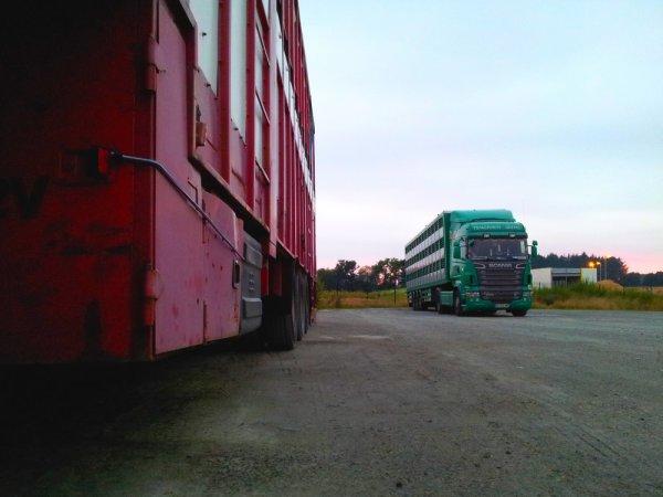 Intéressons-nous aux transports Guevel implantés au Drennec (29).
