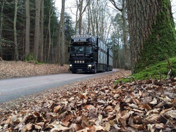 Admirons le camion remorque dans différents moments de son quotidien.