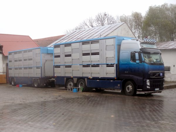 Suivons deux exportations de verrats bretons vers l'oblast de Pskov en Russie.