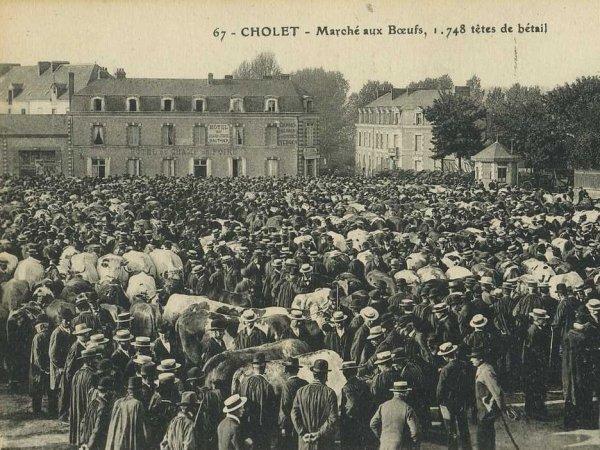 Avant toute chose, exposons l'histoire du marché aux b½ufs de Cholet (49).