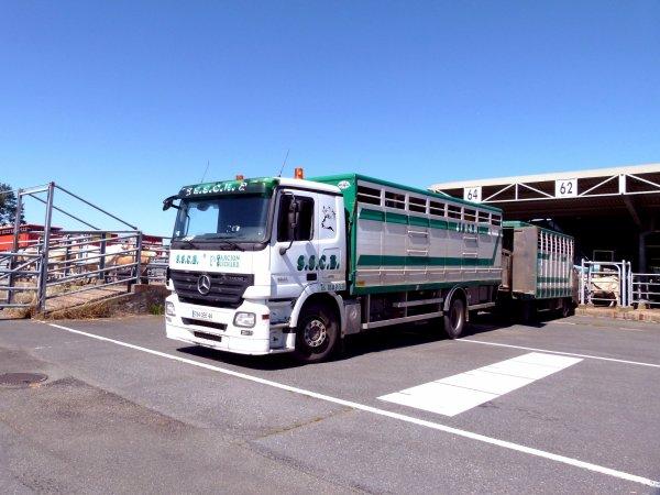 Cholet (49) est le plus gros lieu de vente de bovins de viande en France.