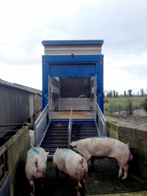 Faisons une liaison des bovins vers les porcs en découvrant une caisse mixte.