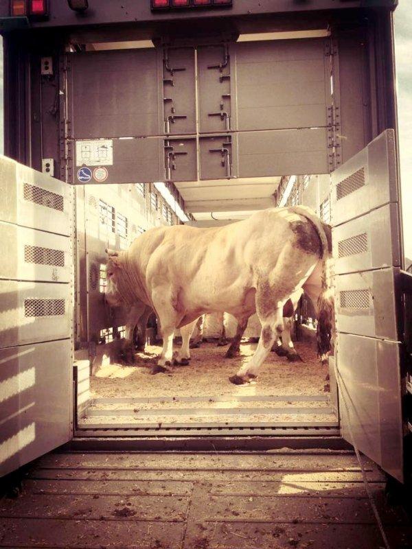 Moments choisis du quotidien des transports Sucatrans de Ruiselede (B).