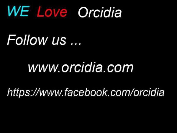 Follow us www.orcidia.com