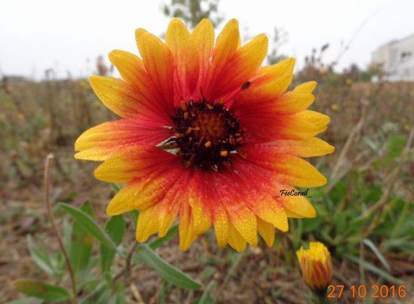 Fleur {Photo personnelle}