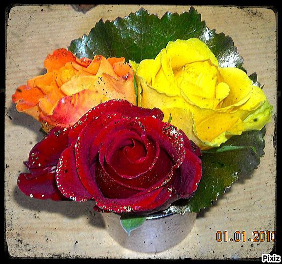 Roses {Photo personnelle}