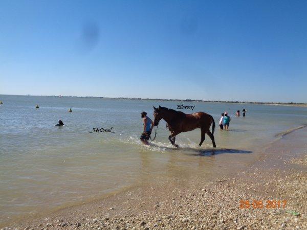 Promenade en famille à la plage d'Aytré (17) [Photos personnelles]