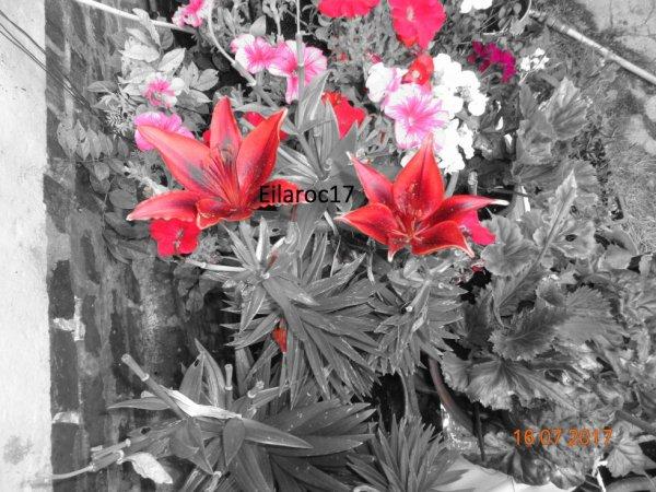 Fleurs [Photo personnelle]