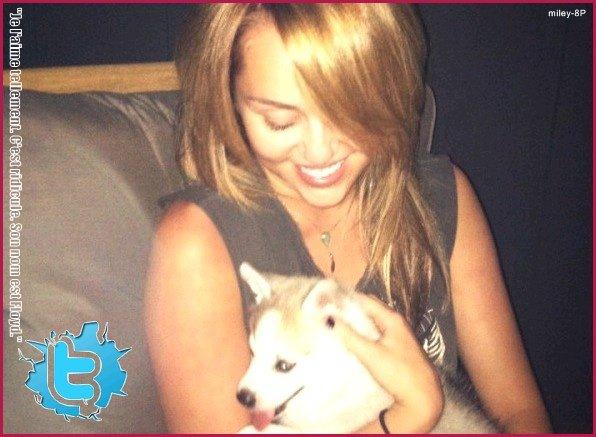 Le 15 juillet 2011 Miley était à l'aéroport Lax de Los Angeles avec à sa bras, un nouveau chien. Un husky vraiment trop mignon !